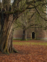 Norwich's Famous Cow Tower Behind Established, Denuded Trees And A Richly Coloured Carpet Of Autumn's Leaf Litter.