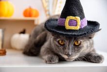 A Gray Cat In A Witchs Hat And Lies On A White Background With Autumn Decor. Halloween Concept And Pet.