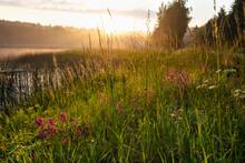Reeds At Lakeshore