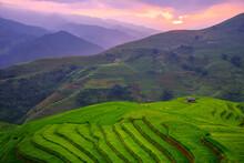 Rice Fields On Terraced Beautiful Shape Of Mu Cang Chai, YenBai, Vietnam. Rice Fields Prepare The Harvest At Northwest Vietnam.