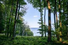 Beech Forest At The Jasmund National Park On Rügen, Mecklenburg-Vorpommern, Germany
