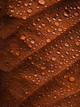Macro Of Autumn Leaf With Water Drops