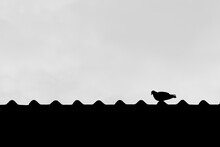 Black And White Photo Of A Pigeon Perched On The Roof Of A House.