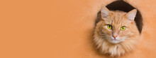 A Beautiful Fluffy Red Cat With Yellow Eyes Looks At The Camera In Close-up. Banner For Site.