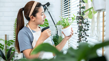 Asian Woman Gardener Is Holding A Small Houseplant To Using Spray Bottle Watering Plants And Take Care Of Plants