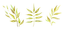 Set Of Watercolor Green Branches And Leaves, Hand Drawn Design Elements