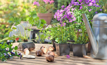 Flowers Pots And Strawberry Plant On A Garden Table In Home Terrace