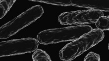 4K Animation Floating Through Microbes, Bacterias In The Intestine, Healthy Microbiome. Medical Video Background