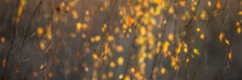 Yellow, Orange And Red Beautiful Autumn Leaves On Trees In Autumn Forest. Golden Sunset And Bokeh Background..