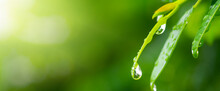 Purity Nature Background, Water Drops On Green Leaf And Sunlight