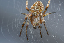 Close Up Shot Of A Spider In The Web