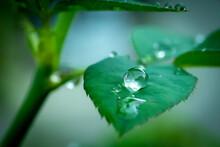 Raindrop When Raining.