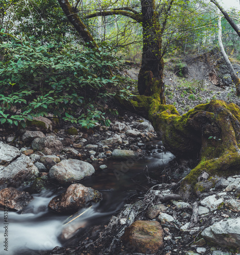 long exposure shot of little waterfall in forest
