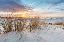 Beach Grass On Dune, Baltic Sea At Sunset