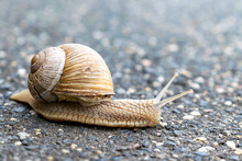 Closeup Shot Of A Snail On The Ground On A Sunny Day