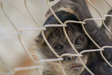 Closeup Shot Of A Monkey In A Cage In A Zoo
