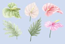 Anthurium And Caladium Botanical Green And Fresh For Plant Lover Gardener.