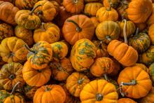 Assortment Of Mini Pumpkins
