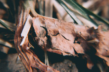 Selective Focus Shot Of Dry Leaves On The Ground
