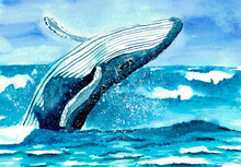 The Illustration Of The Jumping Whale