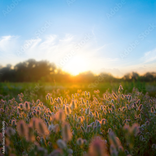 summer forest glade with flowers at the sunset, natural countryside background