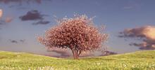 Pink Blossom Tree On A Grass Hill Sunset Sky Spring Flower Meadow Ornamental Japan Landscape 3d Illustration Render