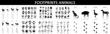 Set Of Animal And Bird Trails With Name, Animal Tracks - Foot Print Guide Vector, Pets Foots Silhouettes Prints Vector Illustration Set, Animal Trails, Animal Footprint Icons Set. Simple Illustratio