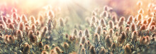Beauty In Nature, Beautiful Nature In Meadow, Flowers And Plants Lit By Sun Rays