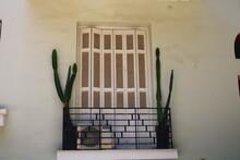 Cactus In The Balcony