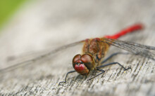 Shallow Focus Shot Of A Brown And Orange Dragonfly In The Nature