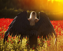 Black Angel In A Field Of Fabulous Red Flowers. Beautiful Girl With White Hair In A Glamorous Black Dress With Black Wings In A Poppy Field. Fallen Angel