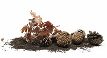Dirt, Soil Pile, Pine Cone And Dry Oak Leaves Isolated On White Background And Texture, Side View