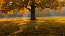 Beautiful Fall Orange Tree Middle Field Covered With Grass With Tree Scenery And Background.jpg