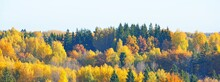 Golden Forest Hills In A Morning Fog. Panoramic Aerial View. Dreamlike Autumn Landscape. Gauja National Park, Sigulda, Latvia