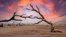 Dead Trees On Hunting Island SC