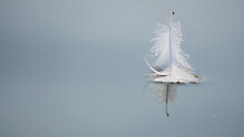 Feather Floating On The Water. Lost Of A Birds Feather Suit, Abandoned And Alone. Light And Weightless.