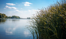 Tall Grass Growing On The Banks Of The River. Beautiful Summer Landscape With Blue Sky And Reflection In The Water