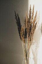 Pampas Grass In Glass Vase Against Beige Wall.