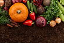 Fresh Harvested Organic Vegetables On Ground Backgound