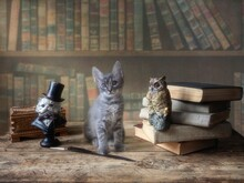 Little Cute Kitten On Wooden Table In The Library