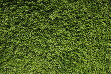 Plant Wall As A Background For Graphic Usage.