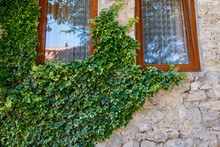 Green Ivy On A Stone Wall With An Old Wooden Windows