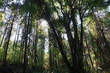 Dark Rainforest With Lianas. The Sun's Rays Make Their Way Through The Trees