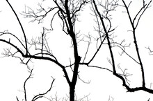 Dead Tree Abstract Silhouette On Nature Background.
