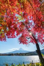 Mount Fuji Seen From Lake Kawaguchi In Autumn Season