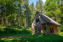 Old Abandoned Wooden House In Green Wild Forest, Dilapidated Hut