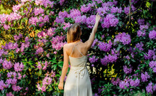 Style Woman Near Rhododendron Flowers In A Grarden In Spring Time
