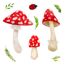 Forest Mushrooms, Hand Drawn Vector Watercolor Illustration