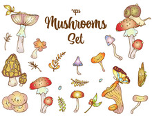 Mushrooms Vector Set: Fungi, Autumn Leaves, Snail, Butterfly, Drops Of The Water.