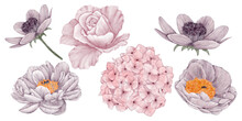 Clip Art Pink Flowers Collection